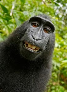 Das Grüne Recht Selfie Urheberrechte