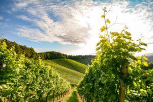 Bio Wein Weinrecht
